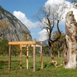 Artenhilfsprogramm_Bergahorn_AlpenparkKarwendel_H.Sonntag